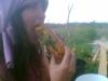 Riesenlöwenzahnbrötchen