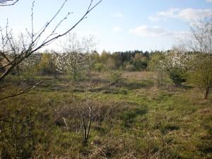 Waldgarten April 2019_3