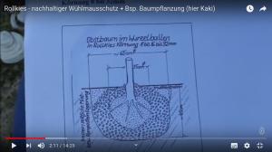 2020-12-31 Schermaus Kieselschutz vom StreuobstwiesenVerein bei Zirkeldreher1